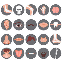Human nose, ear, mouth mustache hair and eye neck back tongue tooth thoart clavicle lips beards knee elbow joint ankle spine brain wrist set, Vector illustration