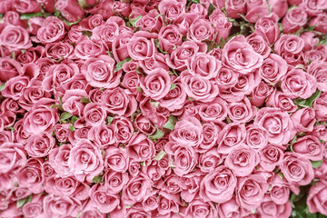 Pink roses with water droplets and blurred corners