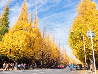 東京 神宮外苑 いちょう並木