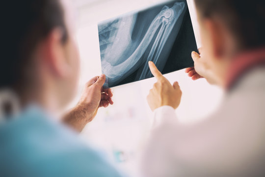 Vet doctors with X-ray of the reptile in veterinary clinic.