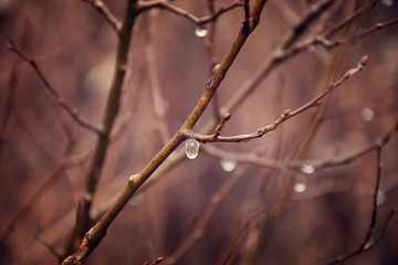 lonely leafless tree branches with drops of water after a November cold rain