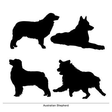 Australian Shepherd breed dog. Vector silhouette of the dog
