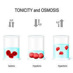 Isotonic, Hypotonic and Hypertonic solutions effects on animal cells.