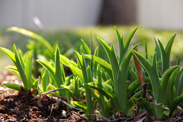 green plants sprouting in spring