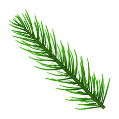 Fir tree branch icon. Realistic illustration of fir tree branch vector icon for web design isolated on white background
