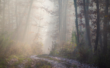 Path in the autumn morning forest
