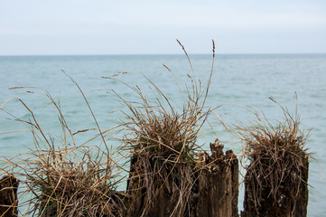 dry grass on the beach