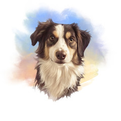 Realistic Portrait of Australian Collie, shepherd dog. Head of a cute puppy on watercolor background. Animal art collection: Dogs. Hand Painted Illustration of Pet. Design template. Good for print