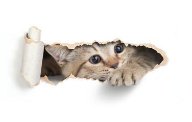 Papier Peint - Funny cat looking through paper hole