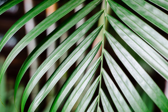 Tropical palm leaves, vivid colored greenery. Creative layout, toned image filter, close up