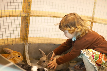 Adorable little girl playing with rabbit at the petting zoo