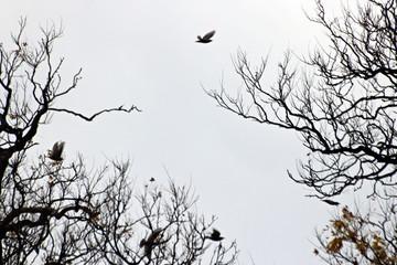 나무가지와새