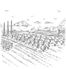 Olive trees garden. Hand drawn vector illustration