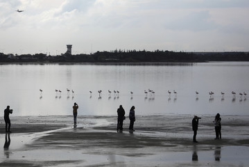 Tourists take pictures of flamingos in a salt lake in Larnaca