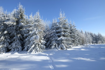 """Das Naturschutzgebiet """"Rotes Moor"""" im Winter, Biosphärenreservat Rhön, Hessen, Deutschland"""