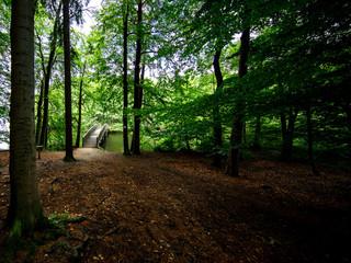Brücke über See im Wald