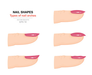Different kinds of nail shapes. Types of nail arches. Science of human body. Side view. Vector illustration