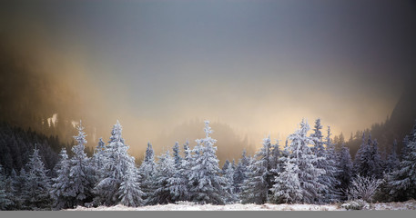 winter landscape with snowy fir trees in the mountains