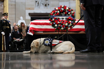 Former U.S. President Bush's service dog Sully pays his respects as Bush's body lies in state in the Rotunda at the U.S. Capitol in Washington