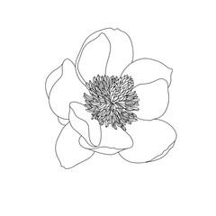 Graphical black flower illustration. Vector.