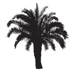 Silhouette of a date palm tree