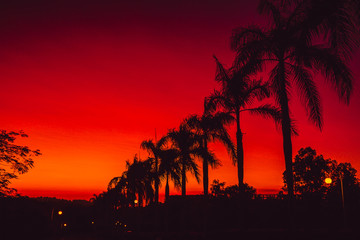 Colorful red bright sunset or sunrise with palms in tropics