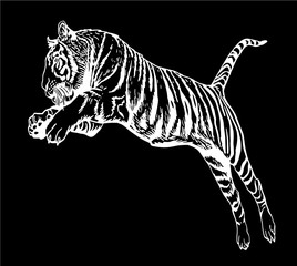 Graphical tiger jumping isolated on black background,vector sketch ,tattoo and logo illustration