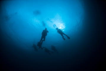 Scuba Divers from below in the blue Water with sun in the background