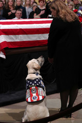 Former U.S. President Bush's service dog Sully looks up as Bush's body lies in state in the Rotunda at the U.S. Capitol in Washington