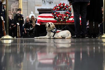 Former U.S. President Bush's service dog Sully looks on as Bush's body lies in state in the Rotunda at the U.S. Capitol in Washington