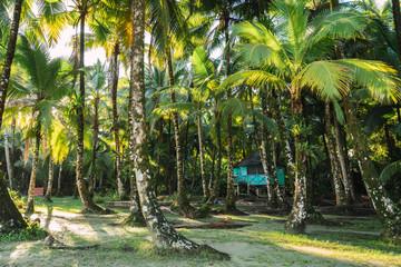 Green palms on seashore with sunlight