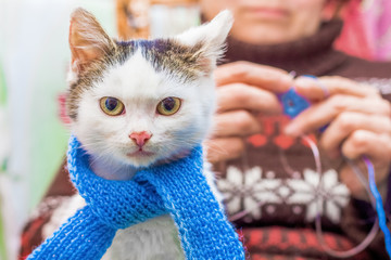 A white kitten in a blue scarf sits on the hands of a woman who deals with needlework_