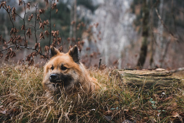 Funny dog in autumn forest