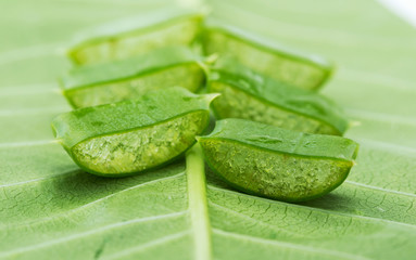 Aloe on green leaf