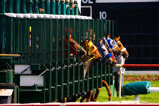 Horse Race Start