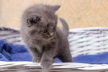 kitten sitting in a basket. Little kittens in a basket with a towel.