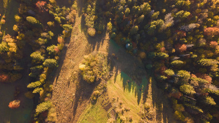 The forest trees from the top view. Aerial view from a drone. Ukraine.