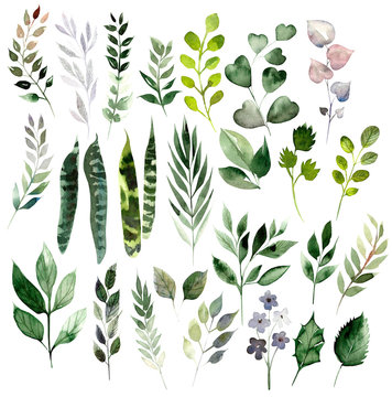 Watercolor set with different leaves. Hand painted elements. Floral illustration isolated on white background.