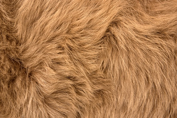 Natural fur of red polar fox closeup, may be used as background or texture
