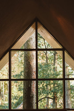 Pine forest through the window