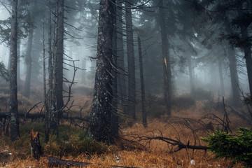 Mystischer Forst Wald im Hochharz. Nationalpark Harz am Brocken