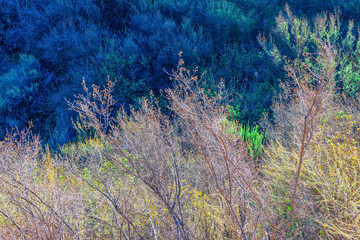 Forest bush in fall sunlight for background or texture