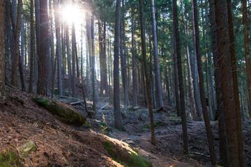 Wunderbar natürlicher Lichteinfall im Wald