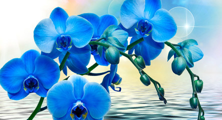 abstract floral background with blue flowers