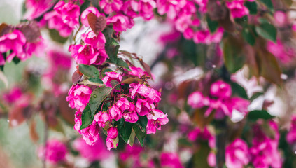 Blossom tree over nature background. Beautiful nature scene with blooming tree, sun and snow. Easter Sunny day. Spring flowers. Springtime. Selective focus