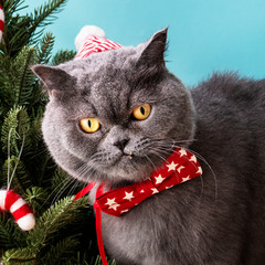 Scottish Fold cat wearing a red bow celebrating Christmas