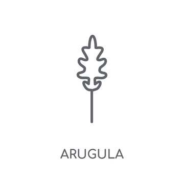 Arugula linear icon. Modern outline Arugula logo concept on white background from Fruits and vegetables collection