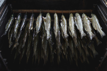 Low angle view of trout fish smoking in large oven