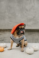 French Bulldog Dressed Up in a French Costume Striped Shirt and Red Beret