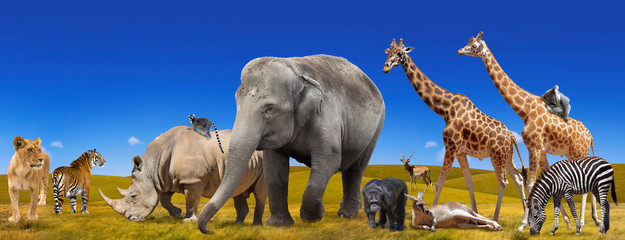 Wild animals collection panorama